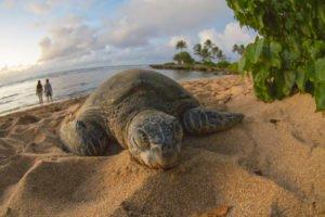 Private Oahu Island Tours